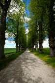 Pathway with trees on boath sides. Taken at summer time.