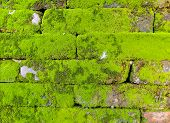 Old Wall Brick With Moss