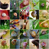 Snail Collage