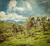 Vintage retro hipster style travel image of Kerala India travel background - green tea plantations w