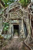 High dynamic range (hdr) image of ancient stone door and tree roots, Ta Prohm temple ruins, Angkor, Cambodia