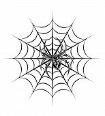 image of black widow spider  - spider on web for tattoo - JPG