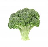 Fresh broccoli vegetable.