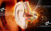 image of inner ear  - Digital illustration of Ear anatomy in colour background - JPG