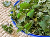 Freshly Cut Nettles In A Bowl.