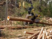 Mechanical cutting of trees in a forest