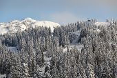 Mount Seymour Peak, Fresh Snow, Vancouver