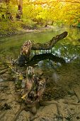Autumn river. Composition of nature.