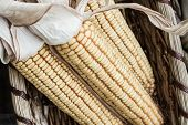 Autumn Corn in Sepia