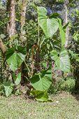 Amazonian Flora