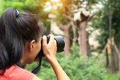 stock photo of panda  - woman photographer taking photo of panda sleeping on tree - JPG