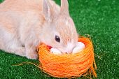 Cute Domestic Rabbit And Easter Eggs poster