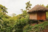 amazonian lodge National Park Yasuni