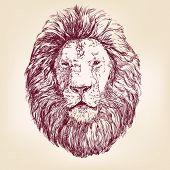 Lion hand drawn vector llustration