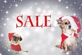 Two Dogs Christmas Sale
