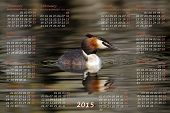 picture of grebe  - European 2015 year calendar with crested grebe duck on water - JPG