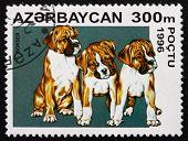 Postage Stamp Azerbaijan 1996 Boxer, Breed Of The Dog