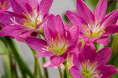 Few Lilly Flowers