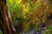 The Fall Foliage of Sedona Arizona