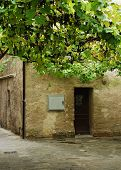 Building In Grado With Grape Vine