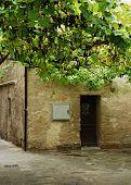 Building In Grado With Grape Vine