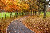 autumn leaves park footpath
