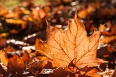 autumn leaf sunshine