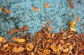 autumn leaves on blue grunge texture