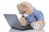 Teddy bear with glasses looking at lap top isolated on white background