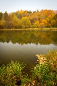 Golden Autumn On The Lake.