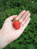Strawberry On Woman's Palm