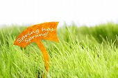 Label With Spring Has Sprung On Green Grass