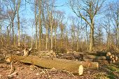 damaged Forest