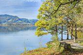Park At Lake Kochelsee