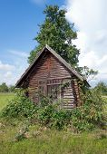 Wooden shed overgrown with blackberries