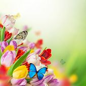 tulips over blurred green background and exotic butterflies, bouquet of spring easter flowers.