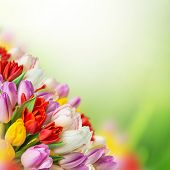 tulips over blurred green background, bouquet of spring easter flowers.