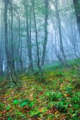 Mysterious forest with fog in spring