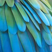 foto of feathers  - Beautiful bird feathers Greenwinged Macaw feathers pattern background