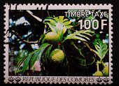 Comoros - Circa 1977: Postage Stamp Printed Comoros Shows Image Of The Breadfruit Tree With Ripening