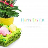 Colorful Easter Eggs And Spring Flower On A White Background
