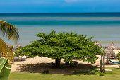 Tropical Garden And  The Ocean Beach