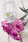 picture of carnation  - Background with fresh carnations flowers. Selective focus is on right flower.