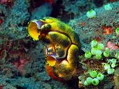 foto of squirting  - The surprising underwater world of the Bali basin - JPG