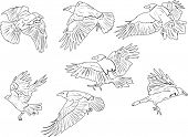 illustration with set of seven crow silhouettes isolated on white background