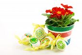 pic of primrose  - colored eggs with primrose flower in a pot on a white background - JPG
