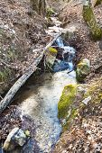 Brook In Mountain Forest In Spring