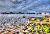 Christchurch harbour near Mudeford Dorset England UK with rocks green seaweed boats and cloudscape