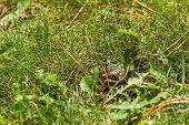 Frog On Grass