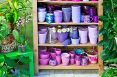 Flowerpots In A Shelf In A Market